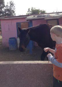 Brock & horse