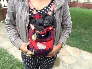 Chio's puppies
