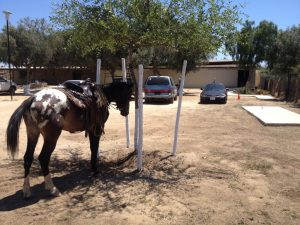 Horse at church
