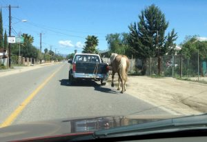 Horse behind truck