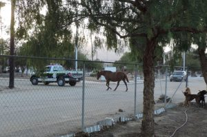 Police leading horse