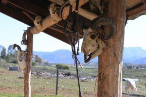 Skulls at restaurant