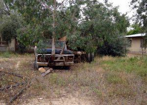 Tree in truck
