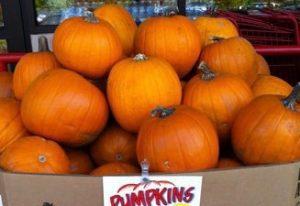 trader-joes-pumpkins-copy-1