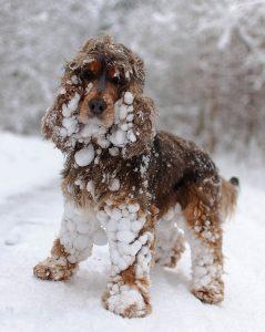 snowy-dog